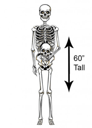 """60"""" Skeleton Jointed Cut Out"""